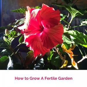 How to Grow A Fertile Garden